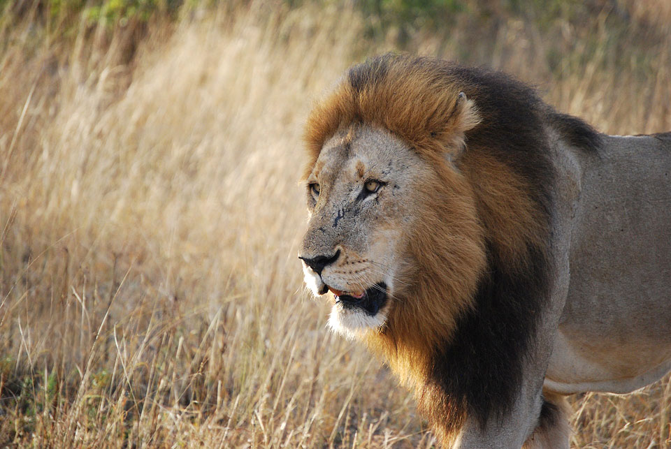 Portico Magazine » Where are the lions and other top ...