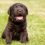 OVC Pet Trust celebrates 30th anniversary