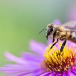 Bee flower choices are altered by exposure to pesticides