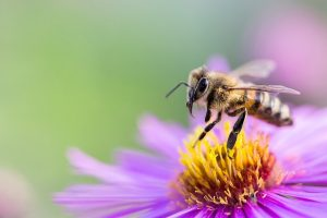 Bee flower choices altered by exposure to pesticides, University of Guelph research