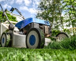 My lawn is overrun with weeds – what can I do?