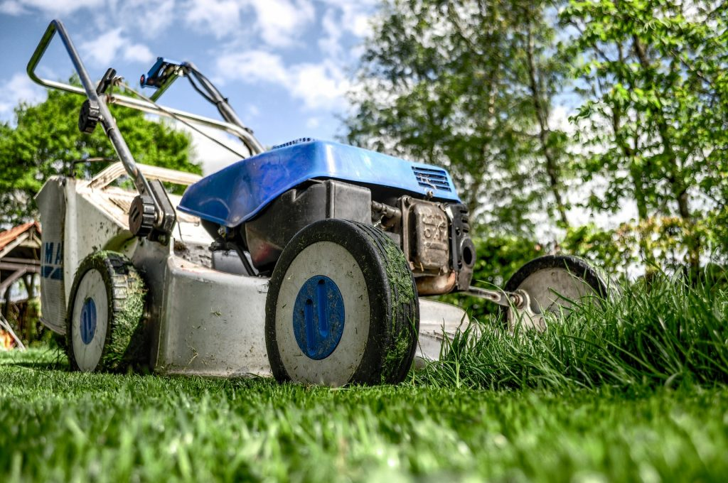 Tips to grow a healthy lawn from the University of Guelph, Portico Magazine.