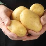 Yukon Gold Potato turns 50