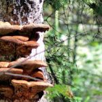 Fungi key to forest diversity