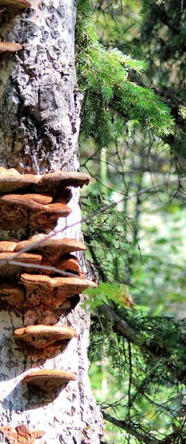 University of Guelph researchers discover fungi is key to forest diversity.